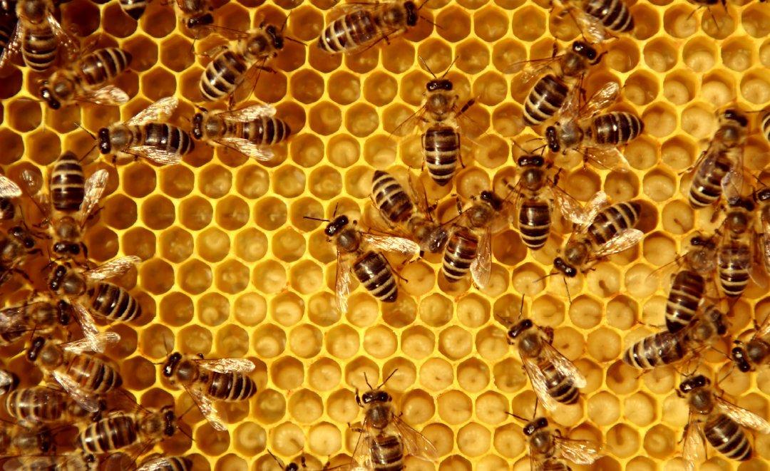 Bee Kind hageland kampanje laget av Fjuz