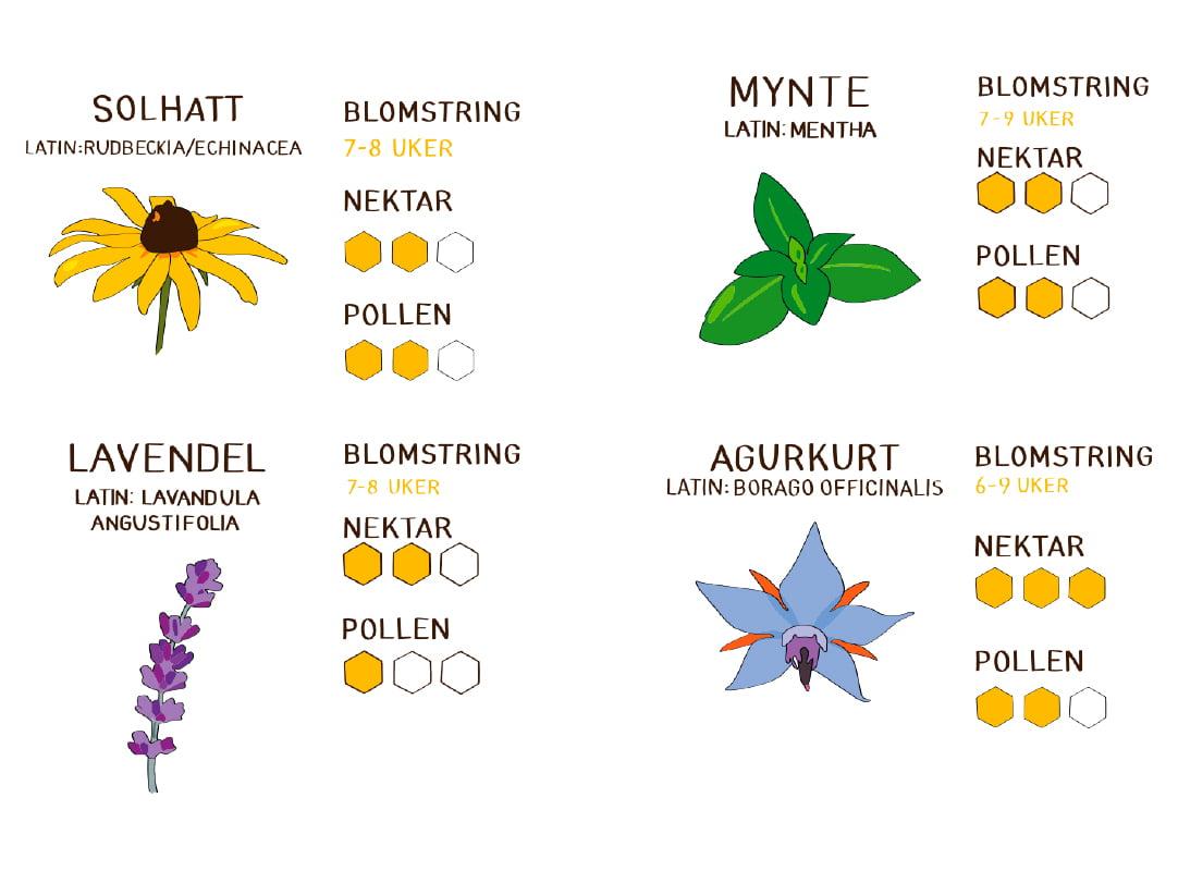 Bee Kind hageland kampanje laget av Fjuz illustrasjon