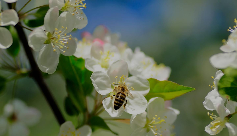 Bee Kind hageland kampanje laget av Fjuz1