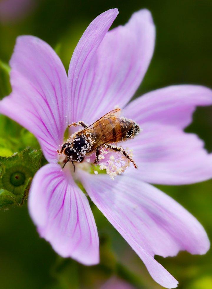 Bee Kind hageland kampanje laget av Fjuzfoto